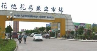 Huadi Pet Market