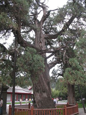 It is said the tree was planted by Huangdi
