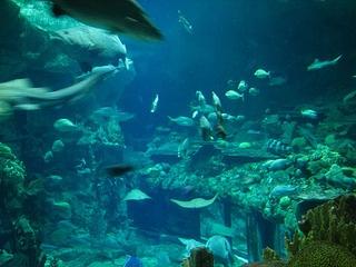 fish in Ocean Park