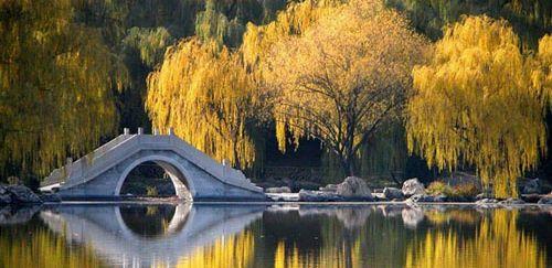 Purple Bamboo Garden