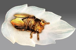 golden cicada and jade leaf