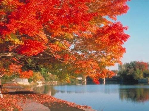 Red Leaves in Fragrant Hills Park
