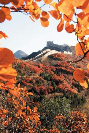 Red Leaves in Badaling National Forest Park