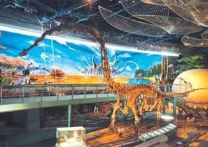Fossils of Dinosaur