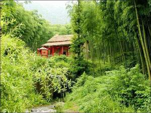 Thatch in the Bamboo