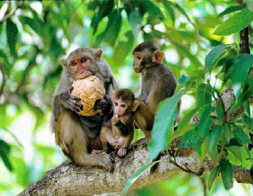 Monkeys on the island