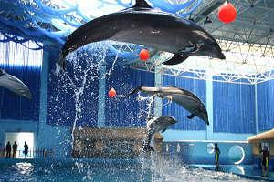 penglai ocean aquarium