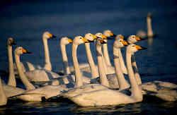 Rongcheng Swan Lake