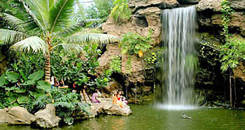 Tropical Plants Sightseeing Garden