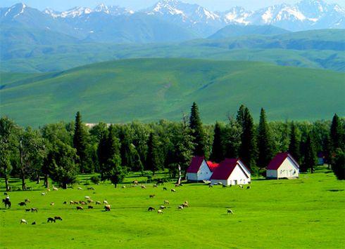 Ili Grassland