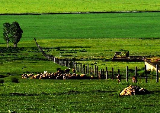 Zhaosu Grassland