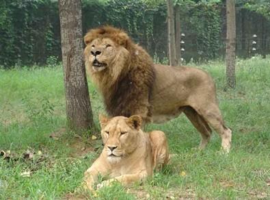 Qinhuangdao Wild Animal Zoo