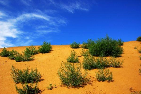 The Gurbantunggut Desert