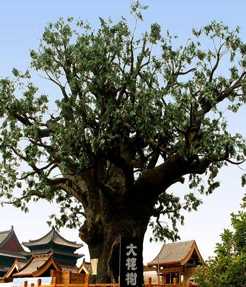 Hongtong Grand Pagoda