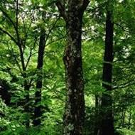 Quanshan Forest Park