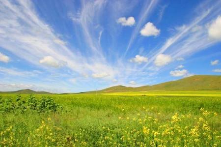 Xilin Gol Grassland