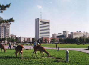 deer city