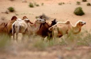 Badain Jaran Desert Tourism District