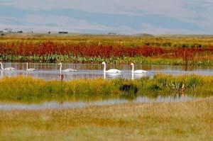 Tengger Moon Lake Desert Ecological Tourism District