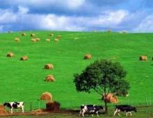 Hulun Buir Grassland