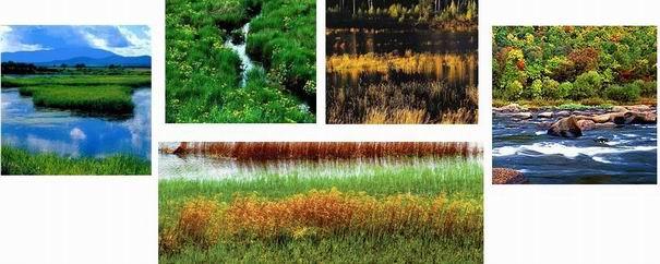 Sanjiang Plain Marshlang