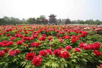 Luoyang National Peony Garden