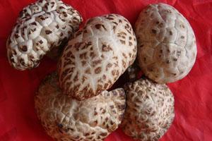 Biyang Mushroom