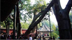 Wolongzhoubai