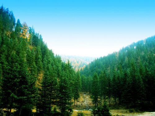 Guancenshan National Forest