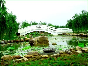A bridge in Zhongyuan Green Park