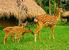 Longtanshan Deer Farm