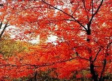 Lafashan National Forest Park