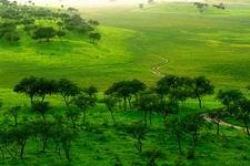 Xinglongsan Yellow Elm Scenic Spot