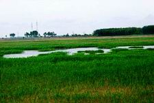 Momoge Wetland