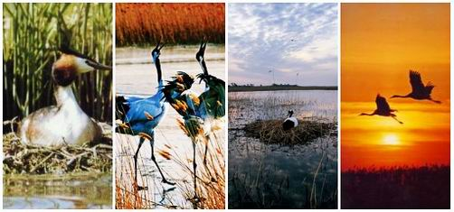 Xianghai National Nature Reserve
