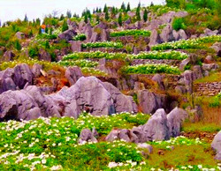 Ocean Of Flowers and Stone Forest on Mt. Ya