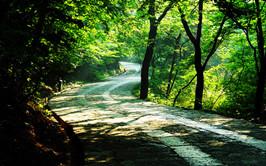 Langya Ancient Avenue