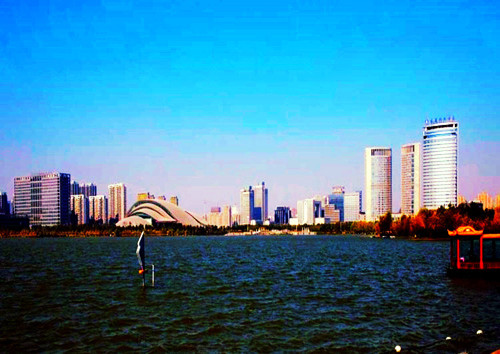 the Beautiful Lake Swan in Hefei
