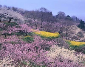 Beautiful Flowers in Spring on Mount Shushan