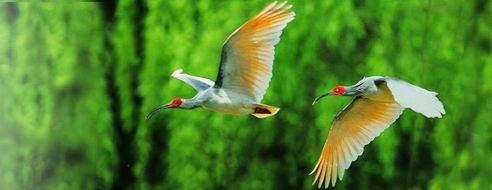 Bird Island History