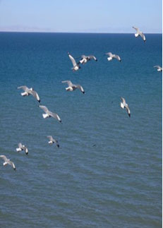 Bird Island Watching Season