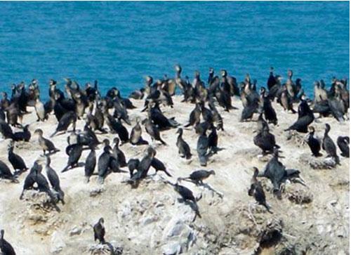 Bird Island Environment