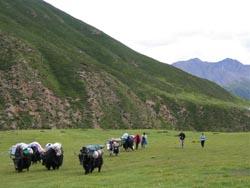 natural scenery of Amne Machin