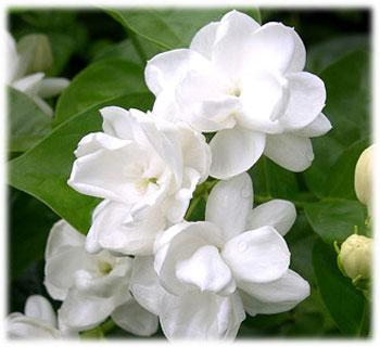 City Flower
