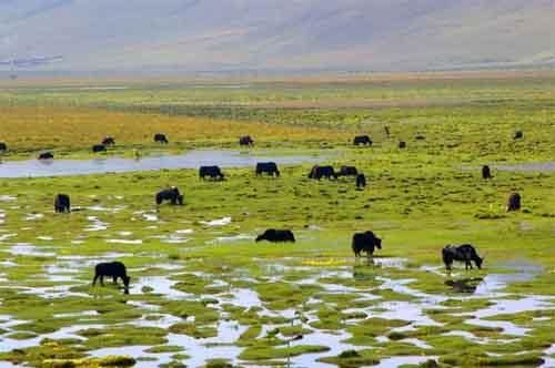 Yushu Tibetan Autonomous Prefecture