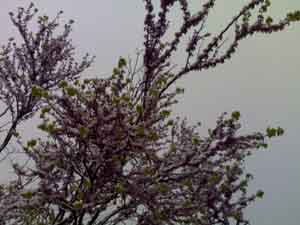 Climate of Yushu