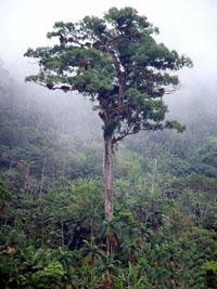The Sacred Tree