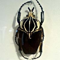 Shanghai Entomological Museum