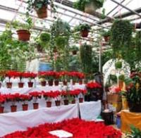 Laitai Flower Market