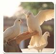 Shanghai Pigeon Trade Association